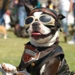 hond met bril