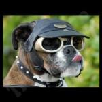 hond met bril 7