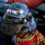 hond met bril4